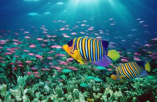 潜水是在泰国一定要从事的活动,安达曼海的潜水体验绝属一流,水质清澈,入门级的游客不妨选择报团体验。