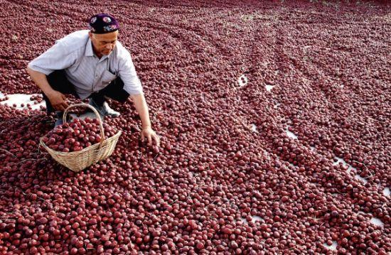 哈密市的果农在晾晒红枣