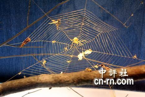 """吴卿金雕作品""""大蜘蛛生态"""",以拉得极细的金丝,组成层层迭迭的蜘蛛网。(嘉义市政府提供)"""