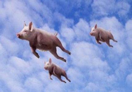 股市奇葩段子天天吐槽:寻找即将起飞的猪(41期)