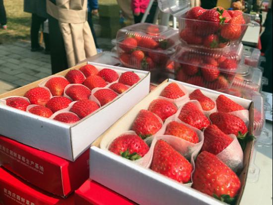 图2 龙海庄园新鲜四季草莓