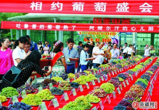 8月26日,在吐鲁番葡萄长廊展区,216个葡萄品种依次摆放,供游客观赏。(记者陈岩摄)