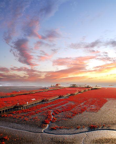 盘锦红海滩风景区:酿造一片片火红的生命色泽
