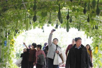 首届农业嘉年华昌平开幕