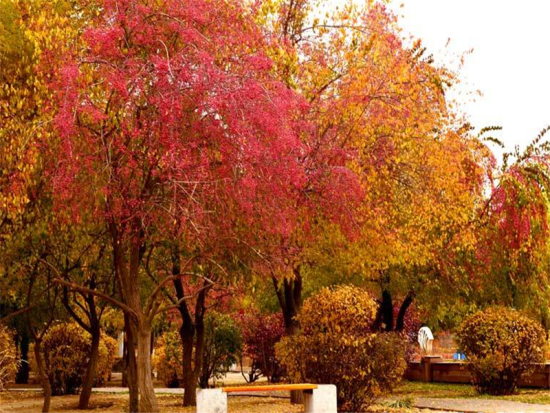 呼和浩特新华公园:自然式和文化式相结合