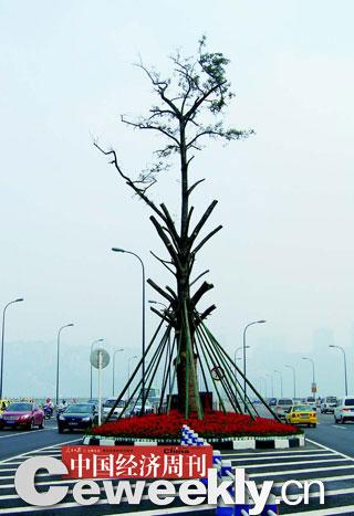 重庆南岸区花上亿元改造树种遭质疑(组图)