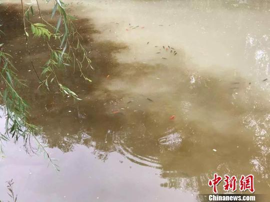 """丽江古城水源变""""牛奶池"""" 官方:多次水色突变"""