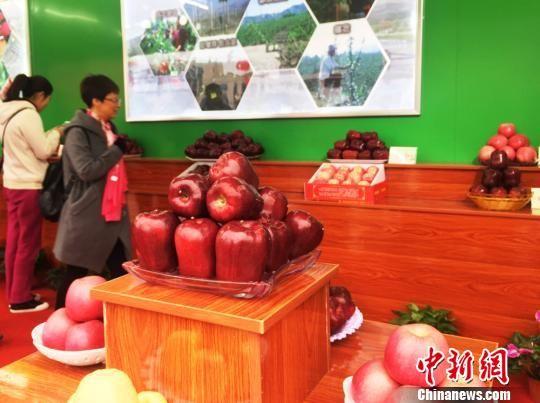 """甘肃天水市长力荐花牛苹果 冀为富民增收""""加速"""""""