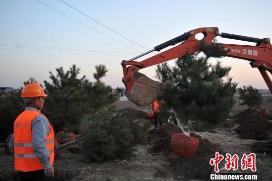 """河北雄安新区千年秀林工程启动 树有专属""""身份证"""""""