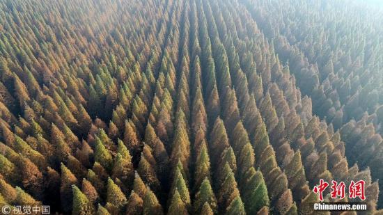 航拍江苏盐城黄海国家森林公园冬景美如画