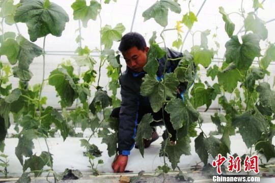 """贵州精准扶贫扶出""""农业工人"""""""