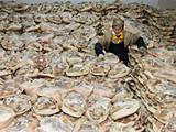 宣威火腿厂年销2亿 盐用75吨