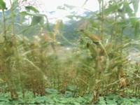 农业部部长:灾害对秋粮生产影响不容忽视