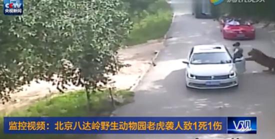 官方回应游客遭老虎袭击:动物园停业配合调查