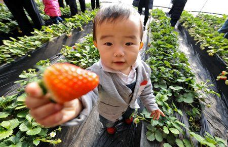 第四届香山草莓文化旅游节开幕(组图)