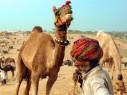 原始古朴的印度骆驼节