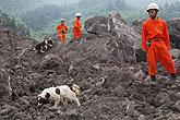消防搜救犬现场搜救