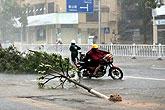 广东阳江树木被吹倒