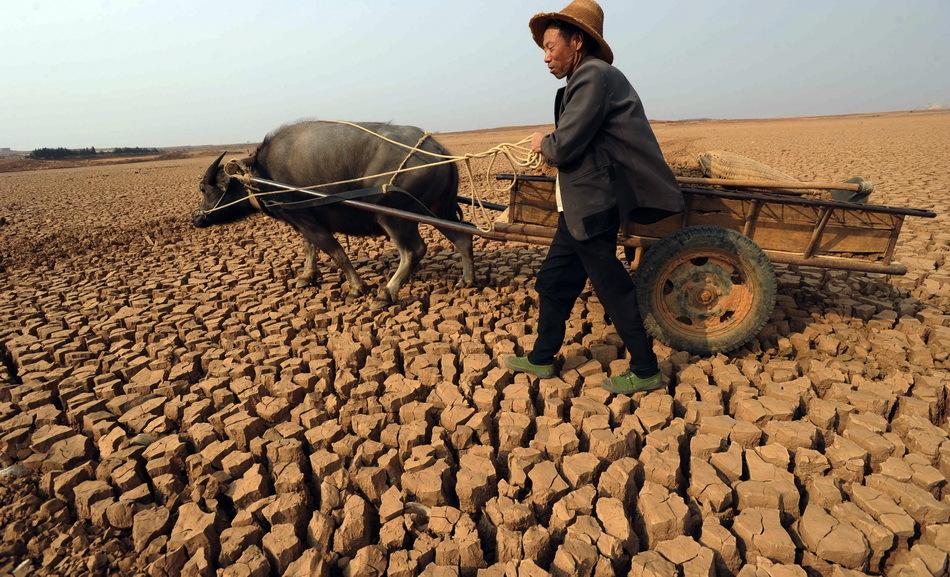 村民从塘底运输塘泥