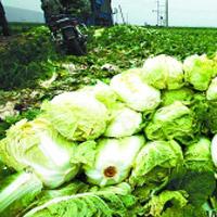 张家口进京蔬菜受阻