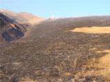 广阔草原被烧成灰
