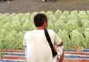 农业部紧急部署蔬菜产销工作