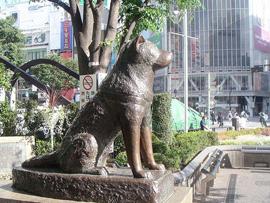 """日本民众悼念""""忠犬八公""""去世78周年"""