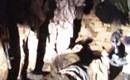 吉尔吉斯公布击毙疑似中国维族分裂者现场