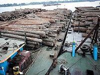 驻缅使馆:中国伐木工人判20年量刑过重