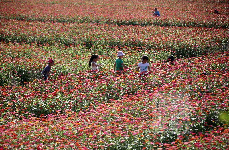 台州乡村十月花似海