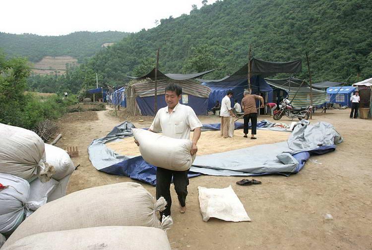 图文:灾后走马湾村民们在抢收夏粮