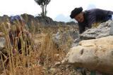图文:72岁老人在乱石中开垦麦田