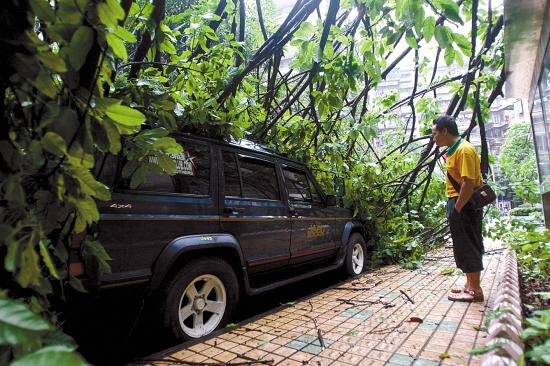 一棵大树被大风拦腰折断,繁茂的枝丫正好埋住路边一辆吉普车,挡住了