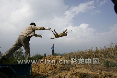 云南弥勒县扑杀3千只犬遏制狂犬病疫情