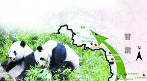每日甘肃关注:全球变暖甘肃大熊猫北迁
