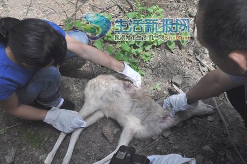 云南野生动物园血案 五狗咬死六鹿