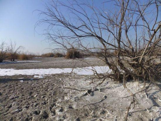被污水淹没过的土地碱化严重大片红柳已经死亡
