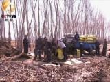 黑龙江讷河洪涝灾害严重影响土豆质量致销售难