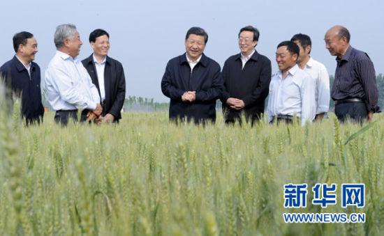 这是5月9日下午,习近平在尉氏县张市镇高标准粮田察看小麦长势。新华社记者张铎摄