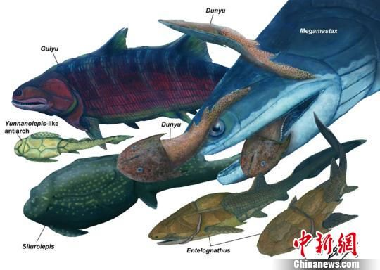 志留纪潇湘动物群的各种鱼类复原图,其中正在捕食小鱼的大鱼为最新发现的钝齿宏颌鱼。苏柏恩/绘图