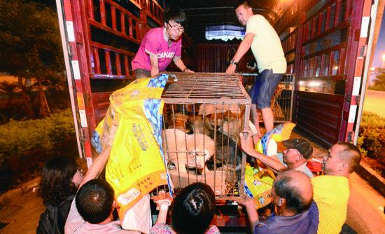 动保人士将在玉林二环路安置的狗运回天津、重庆,这些狗多数是拿钱从狗贩子手中买回来的。摄/法制晚报记者刘畅