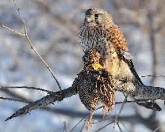 鸟可是国家二级保护动物
