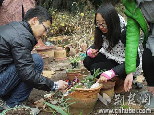 武汉生物工程学院学生用破花盆创作迷你园艺景