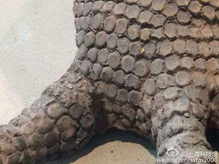 导致科莫多巨蜥的爪子