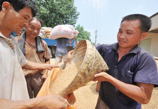 图文:德阳市粮食企业的工作人员装运小麦
