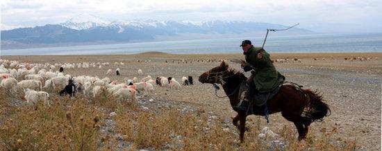 组图:新疆伊犁草情长势下降牧民被迫转场