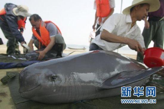 5月20日,天鹅洲国家级长江豚类保护区的工作人员和中科院的科研人员在监测江豚的生活状况。新华社发(肖岩 摄)