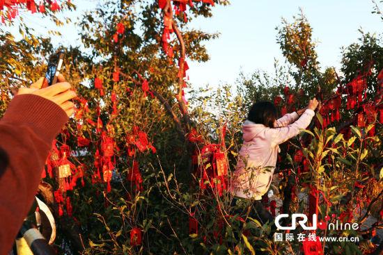 2013年10月19日,女孩攀爬上树,将红绳系在高高的树枝上.