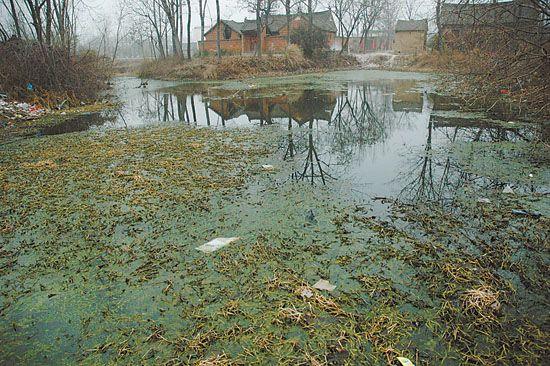 村中坑塘。