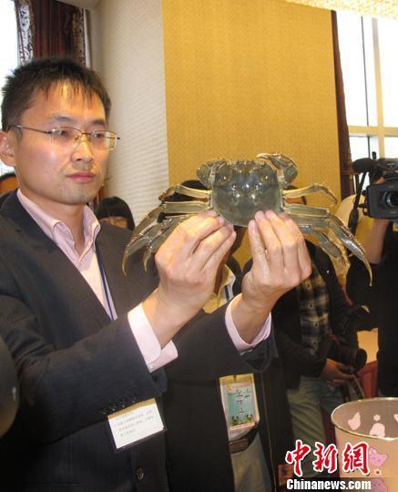 河蟹的内部结构解剖图